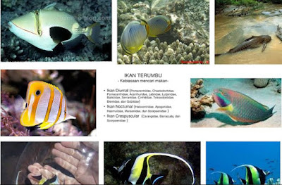 Ikan Diurnal