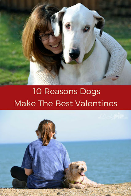 Why dogs make the best dates on Valentine's Day