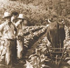 plantação da souza cruz em meados do século XX