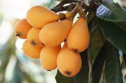 buah biwa