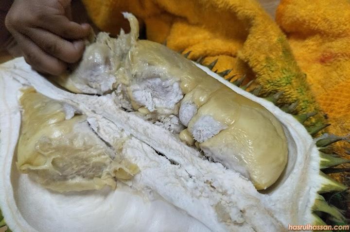 Ciri dan rasa buah Durian Hutan Semenanjung