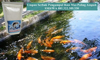 Umpan Serbuk Pengumpul Ikan Mas Paling Ampuh