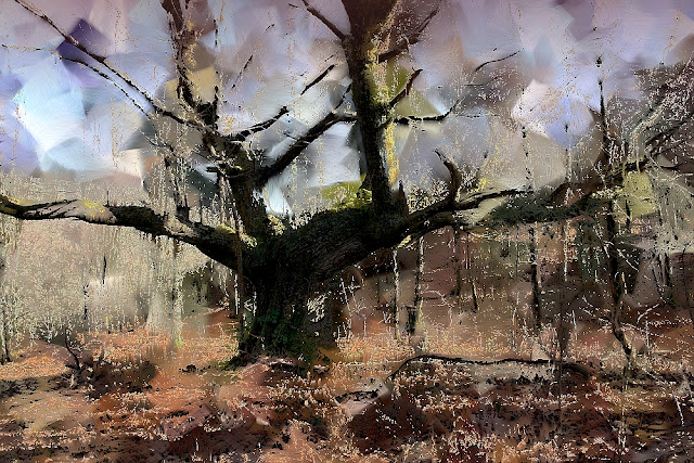 foto pinturas de árboles centenarios por munimara