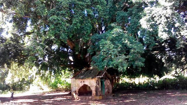 """Inilah Makam """"Pangeran Parajir"""" Penemu Bekisar di Kangean"""