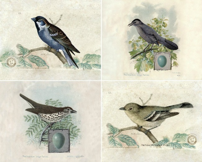vintage bird art free printables