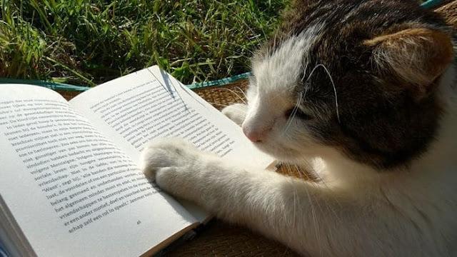 La croissance de l'apprenant à travers la lecture des romans