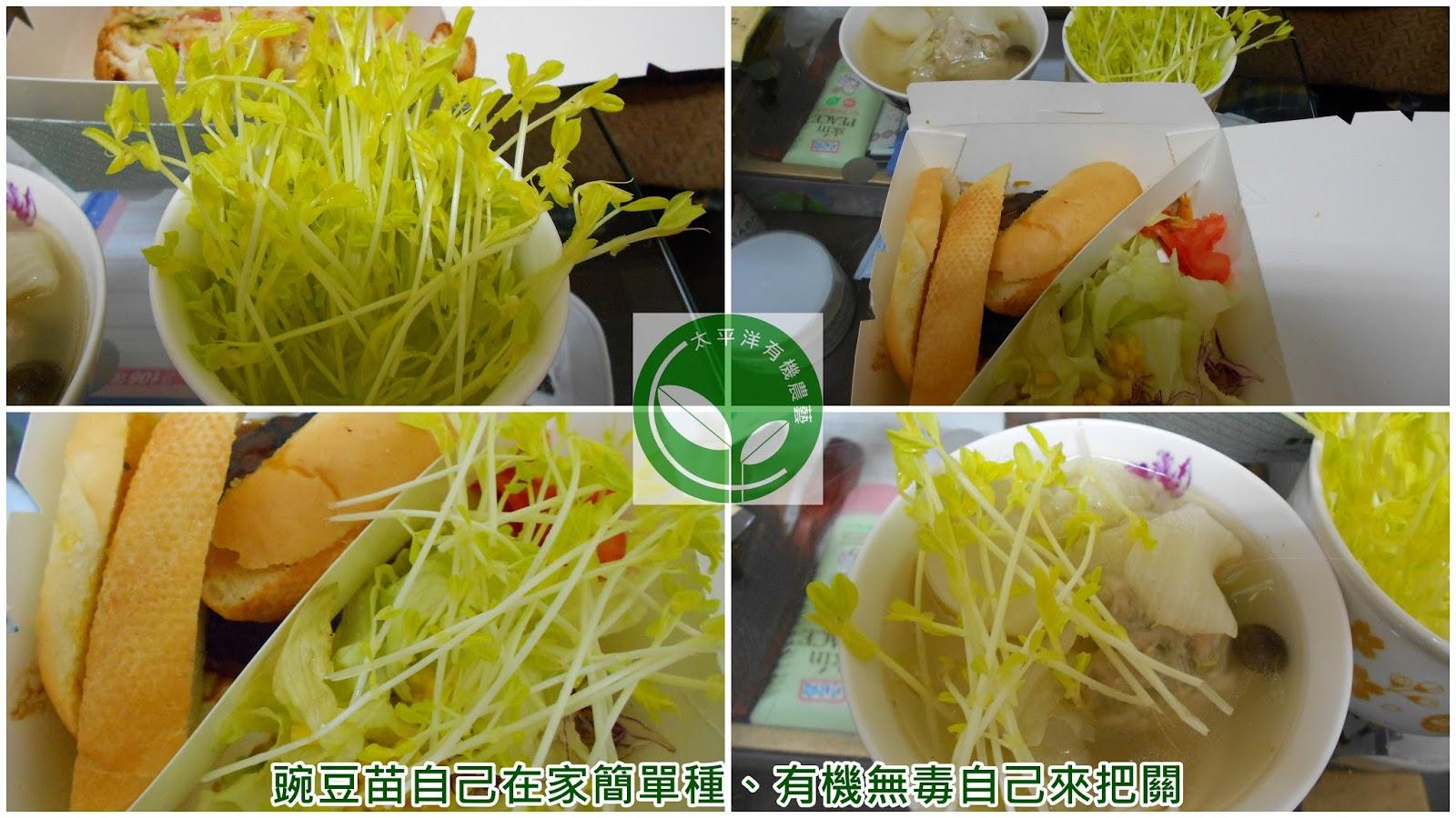 豌豆,荷蘭豆,乾豌豆,豌豆種植,豌豆苗,種豌豆苗,豌豆苗栽培,豆苗,豌豆苗種植,如何種豌豆苗