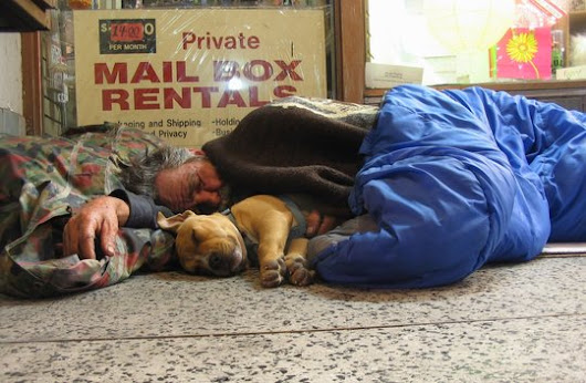 Emergency Vet Care For Pets Of The Homeless