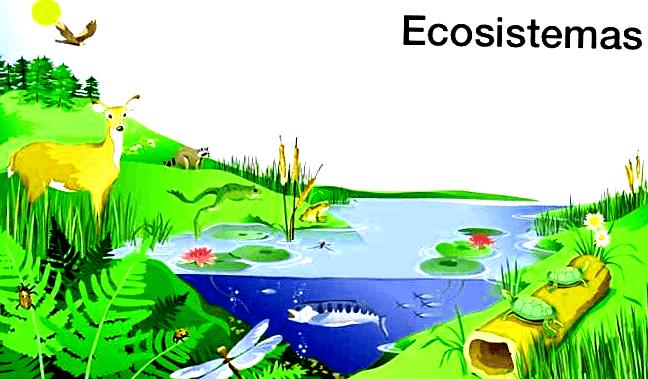 Tipos De Tipos De Ecosistemas