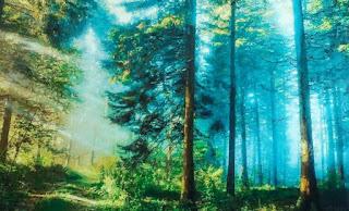 paisajes-con-bosques-y-bodegones