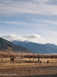 Horses-Tobacco Root Mountains-Montana
