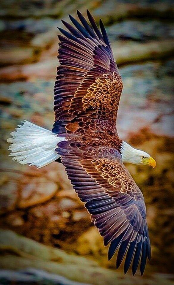 Aves e Pássaros