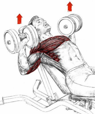 Exercices comment bien muscler ses pectoraux - Pectoraux developpe couche ...