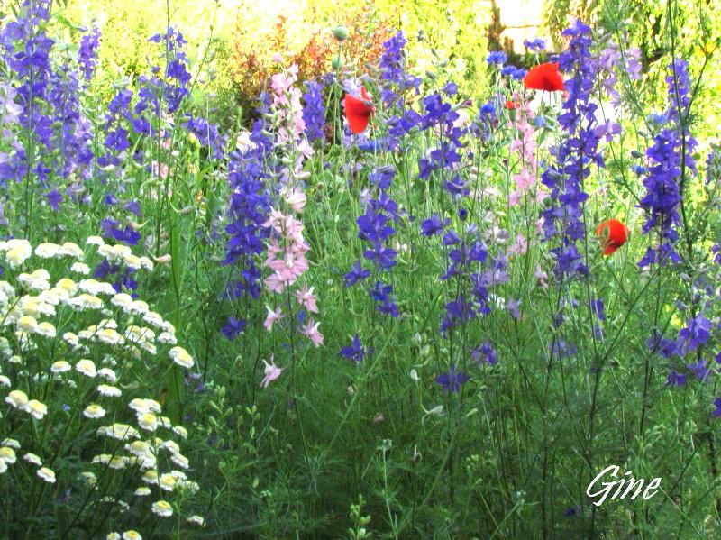 Au jardin de gine avant l 39 orage - Massif de fleurs photos ...