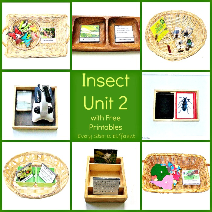 Insect Unit 2