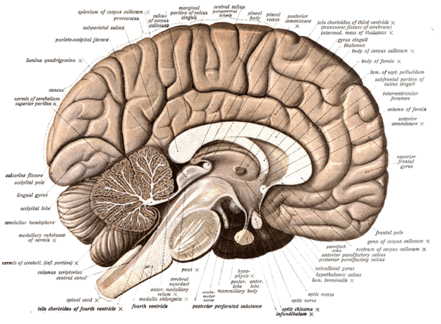 Beynimizin Sadece %10'unu Kullanıyoruz