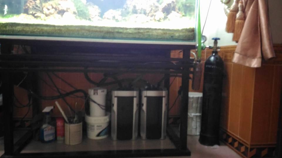 1 lọc phụ và 2 lọc chính cho bể thủy sinh lớn