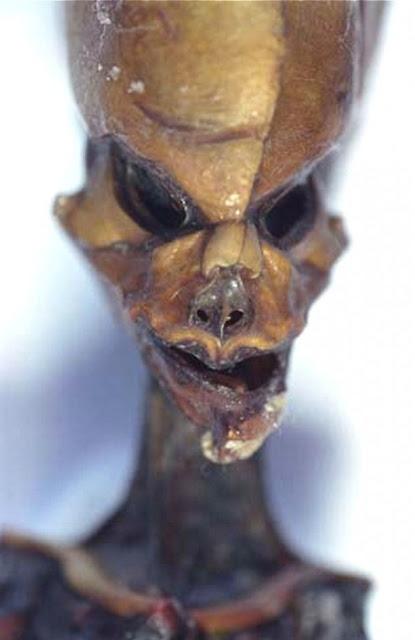 Peruvian Alien bodies found in a cave in Peru