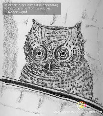 Owl-Fonda'sAnimalPhotoChallenge-HuesnShades