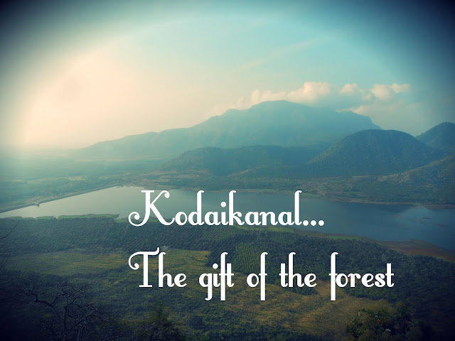 The gift of the forest, kodaikanal, tamilnadu