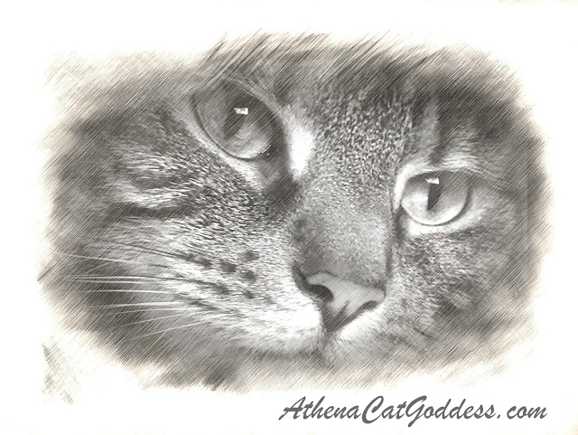 digital sketch of tabby cat