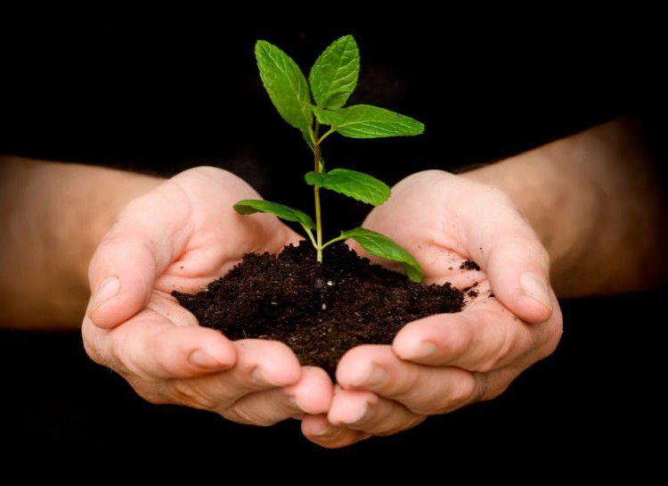 Ciptakan Kebaikan Dengan Menanam Pohon Tarjo