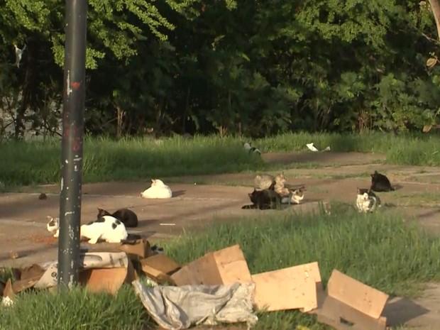 Gatos são encontrados mortos em praça em São Luís, MA