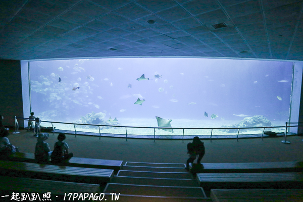大洋池,展示遠洋200公尺深的海底,感受大海的壯闊