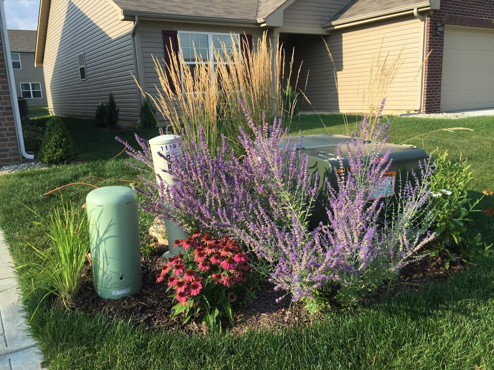 Backyard Neophyte Landscaping Blog: List Of Plants In My Yard