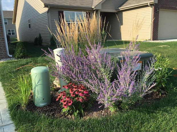 Lawn Aeration Debacle Backyard