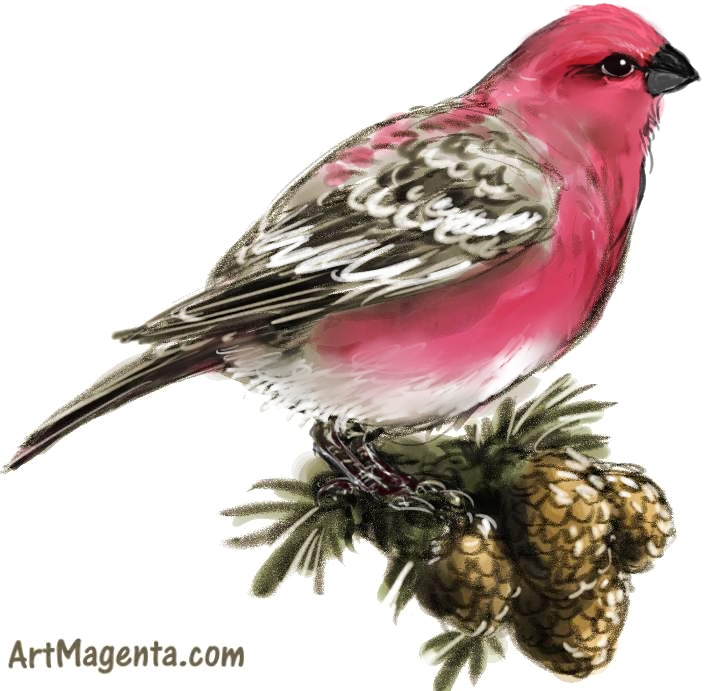 Pine Grosbeak sketch painting. Bird art drawing by illustrator Artmagenta