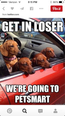 Funny dog pictures : Get into the car NOW