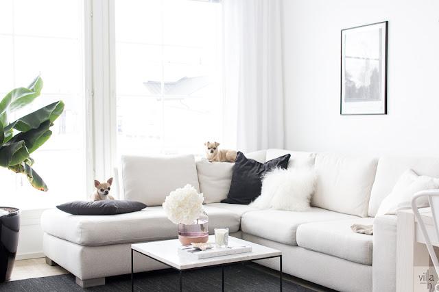 sisustus, olohuone, interior, chihuahua, koirat