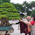 Wow, Ada Bonsai Seharga Rp 1 Miliar Sedang Dipamerkan di Surabaya