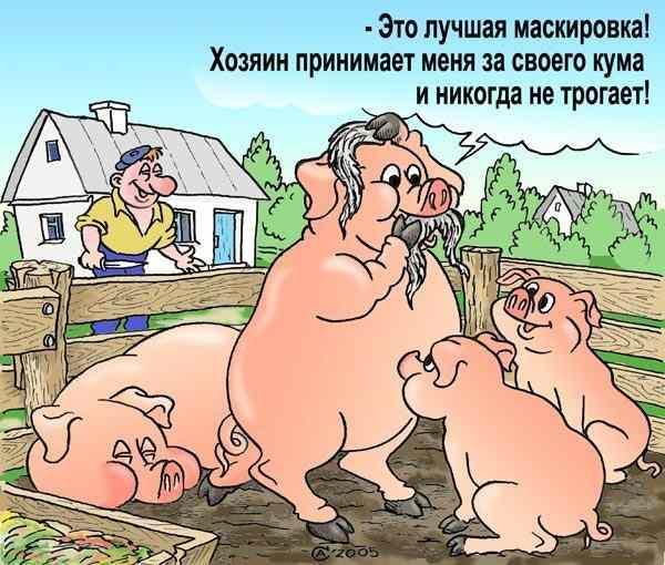 10 смешных карикатур о животных