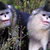 Spesies Monyet Baru Ini Suka Bersin Kalau Hujan