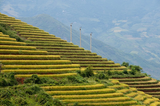 Terraces Fields - brand of Northern Vietnam. 3