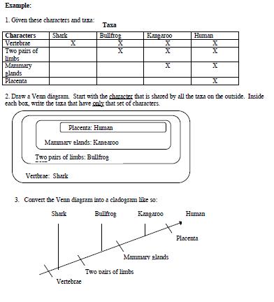 Bio Olimpiade Cladogram