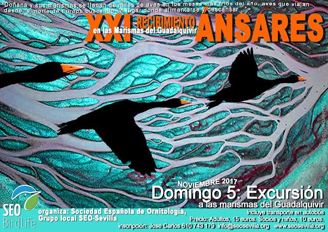 XXI Recibimiento a los Ánsares, Edición 2017. Grupo local SEO-Sevilla