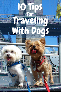 Travel the World: 10 tips for traveling with dogs and having successful pet-friendly vacations.
