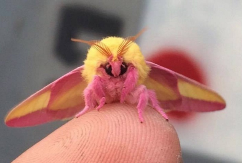 The Cutest Insect In The World's Looks Like A Masterpiece Of Confectionary