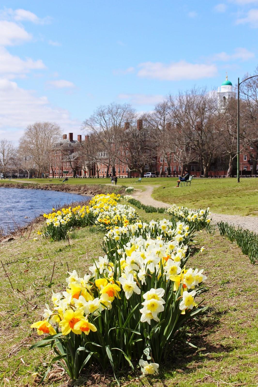 bijuleni - Charles River flowers