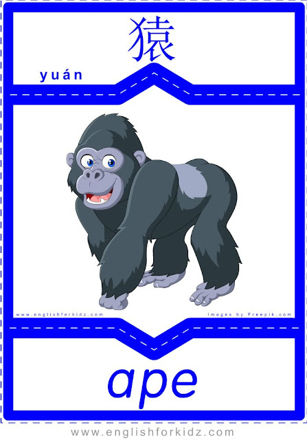 Ape - English-Chinese flashcards for wild animals topic