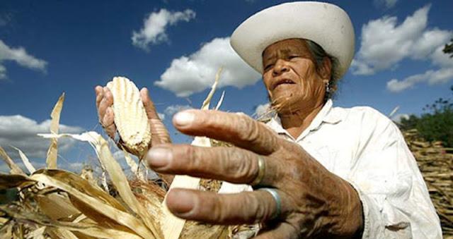 Pago a muertos y dinero que no llegó al campo: así desvió millones de pesos la Sagarpa