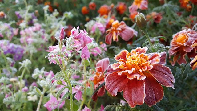 иней, цветы