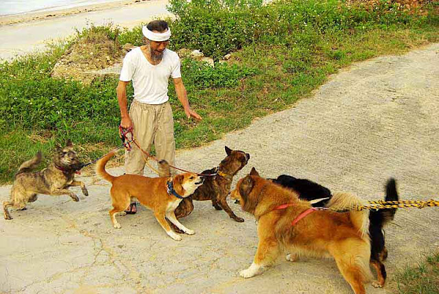 dogs,leash,growling