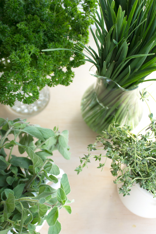 How To Store Fresh Herbs by Eliza Ellis