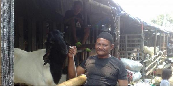 contoh peternak kambing sukses