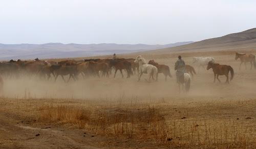 Manada de cavalos sendo tocada na Mongólia