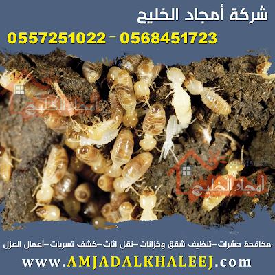شركة ابادة النمل الابيض بالمدينة المنورة
